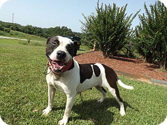 American Pit Bull Terrier Mix Dog for adoption in Thomaston, Georgia - Hey Gurl