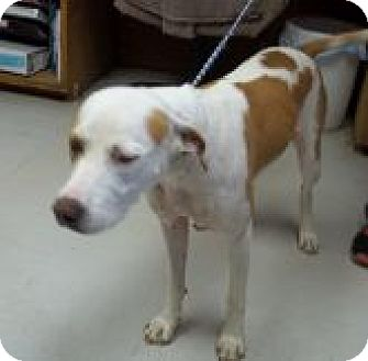 Catahoula Leopard Dog Mix Dog for adoption in Silver City, New Mexico - Princess