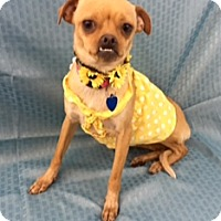 Adopt A Pet :: Bernice - Lake Elsinore, CA