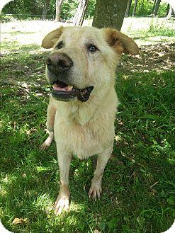 Labrador Retriever Mix Dog for adoption in Louisville, Kentucky - Hudson