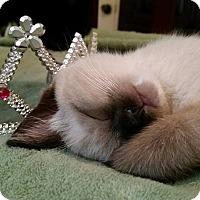 Adopt A Pet :: Willow - Ocala, FL
