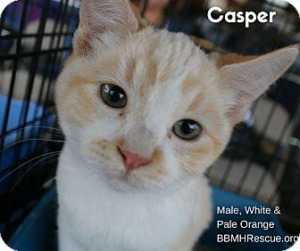 Domestic Shorthair Kitten for adoption in Temecula, California - Casper