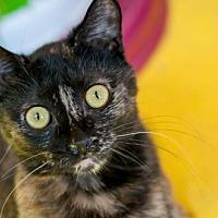 Adopt A Pet :: Isabelle - Santa Rosa, CA