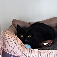 Adopt A Pet :: Mila Aztec - Denver, CO