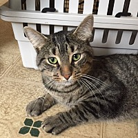 Adopt A Pet :: Prince (LE) - Little Falls, NJ