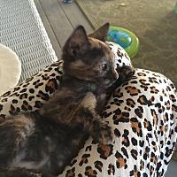 Adopt A Pet :: Gigi - Metairie, LA