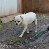 Adopt A Pet :: Cookie Monster - Eugene, OR