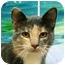 Photo 1 - Calico Cat for adoption in Denver, Colorado - Lorissa