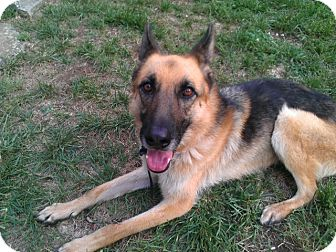German Shepherd Dog Dog for adoption in Greeneville, Tennessee - Daisy