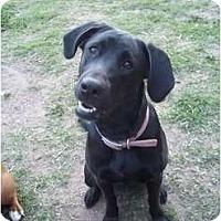 Adopt A Pet :: La La - Bakersfield, CA