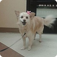 Adopt A Pet :: Scooter - Hamilton, ON