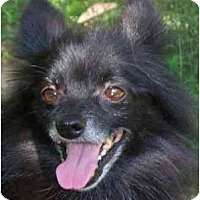 Adopt A Pet :: Mickey - Gum Spring, VA