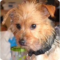 Adopt A Pet :: George - Greensboro, NC