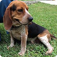 Adopt A Pet :: Barnaby - San Antonio, TX