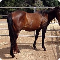 Adopt A Pet :: Mocha - El Dorado Hills, CA