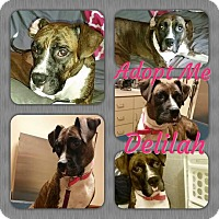 Adopt A Pet :: Delilah - Cheney, KS