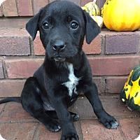Adopt A Pet :: Molly - Bedminster, NJ
