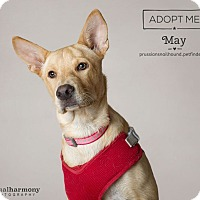 Adopt A Pet :: May - Phoenix, AZ