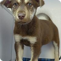 Adopt A Pet :: Newton - Manning, SC