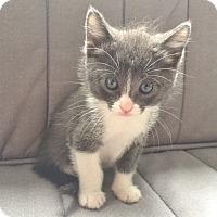 Adopt A Pet :: Mystic - Davis, CA