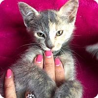 Adopt A Pet :: Gypsy - Nolensville, TN