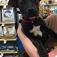 Adopt A Pet :: Haskell - Irmo, SC