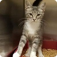 Adopt A Pet :: Yoko - Americus, GA