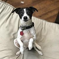 Adopt A Pet :: TJ - Charlotte, NC