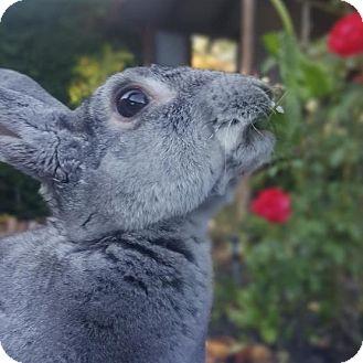 Mini Rex Mix for adoption in Los Angeles, California - Fioki