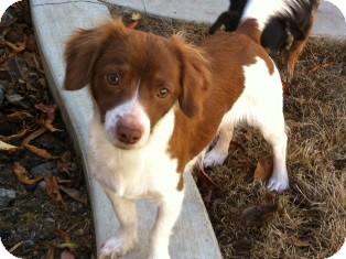 Dachshund Mix Dog for adoption in Tustin, California - Maggie