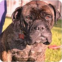 Adopt A Pet :: Kelsy - Phoenix, AZ
