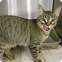 Adopt A Pet :: Dora - Warminster, PA