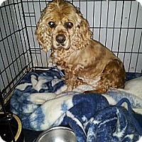 Adopt A Pet :: Abby - Denver, IN