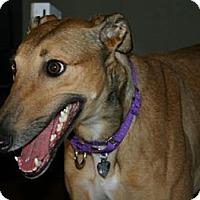 Adopt A Pet :: Flyin Mitzi