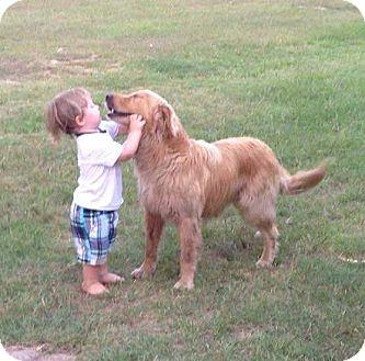 Golden Retriever Mix Dog for adoption in BIRMINGHAM, Alabama - Jack II