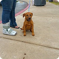 Adopt A Pet :: Bowser - Lewisville, IN