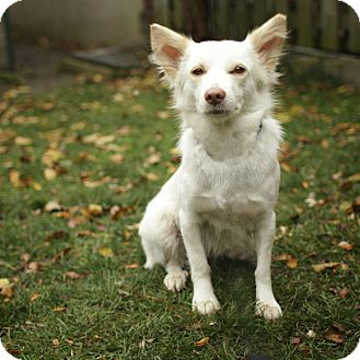 Terrier (Unknown Type, Small)/Spaniel (Unknown Type) Mix Dog for adoption in Zephyr, Ontario - Khao