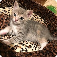 Adopt A Pet :: Piper - Parker Ford, PA