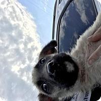 Adopt A Pet :: Journey - Montgomery, AL