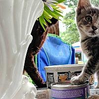 Adopt A Pet :: Jenny - Texarkana, AR
