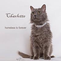 Adopt A Pet :: Charlotte - Sherman Oaks, CA