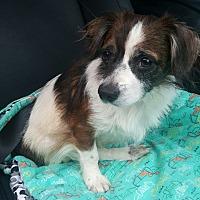 Adopt A Pet :: Finnegan - Decatur, GA