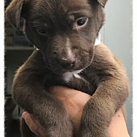 Adopt A Pet :: Dyson - Los Alamitos, CA
