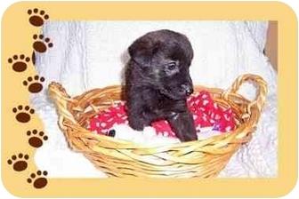 Labrador Retriever Mix Puppy for adoption in Taylor Mill, Kentucky - Gracie