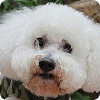 Adopt A Pet :: Mac - La Costa, CA