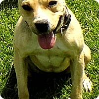 Adopt A Pet :: Sweet Sandy - Washington Court House, OH