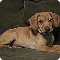Adopt A Pet :: Bessie - New Boston, MI