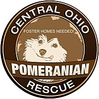 Pomeranian Dog for adoption in Delaware, Ohio - Foster Homes Needed for Poms- all ages