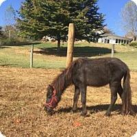 Adopt A Pet :: Rosemary - Loudon, TN