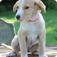Adopt A Pet :: Banzi - Waldorf, MD